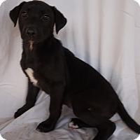 Adopt A Pet :: Cozy - Oviedo, FL