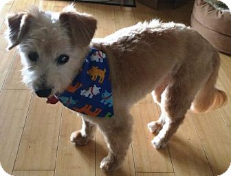 Terrier (Unknown Type, Medium)/Yorkie, Yorkshire Terrier Mix Dog for adoption in Harrisburg, Pennsylvania - Brady