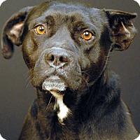 Adopt A Pet :: Cobalt - Newland, NC