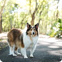 Adopt A Pet :: Kali - Palm Harbor, FL