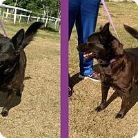Adopt A Pet :: Italy - Orlando, FL