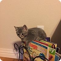 Adopt A Pet :: Albus Dumbledore - Bentonville, AR