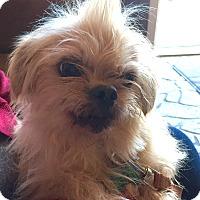 Adopt A Pet :: Bianca - Starkville, MS