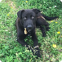 Adopt A Pet :: Sammy - Knoxville, TN