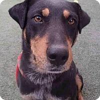 Adopt A Pet :: Sassy - Tucson, AZ