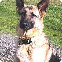 Adopt A Pet :: Lady H - Pleasant Grove, CA