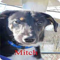 Adopt A Pet :: Mitch - Warren, PA