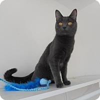 Adopt A Pet :: Church - Richmond Hill, ON