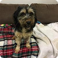 Adopt A Pet :: 'ESPANTO' - Agoura Hills, CA