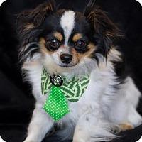 Adopt A Pet :: Stash - Phelan, CA
