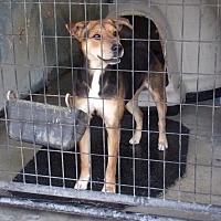 Adopt A Pet :: Chandra - Jamestown, TN