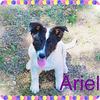 Adopt A Pet :: ARIEL - Friendly! - Chandler, AZ