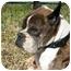 Photo 1 - Boxer Dog for adoption in Albany, Georgia - Walter