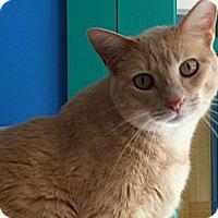 Adopt A Pet :: Kiera - Topeka, KS