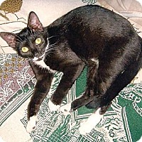 Adopt A Pet :: Tina - Chesapeake, VA