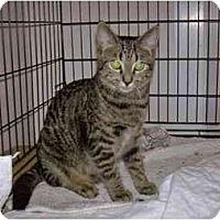 Adopt A Pet :: Tigger - Portland, ME