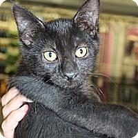 Adopt A Pet :: Tatsu - Santa Monica, CA