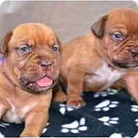 Adopt A Pet :: Puppies, puppies - Phoenix, AZ