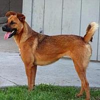 Shepherd (Unknown Type) Mix Dog for adoption in Lathrop, California - Doodle