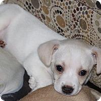 Adopt A Pet :: Fern - Millersville, MD