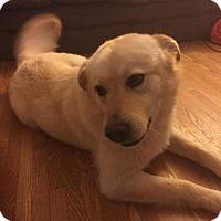 Adopt A Pet :: Blanca - Regina, SK