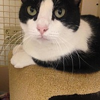 Adopt A Pet :: Cookie - Napa, CA