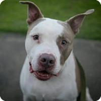 Adopt A Pet :: B - Austin, TX