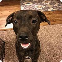 Adopt A Pet :: Eve - Broken Arrow, OK