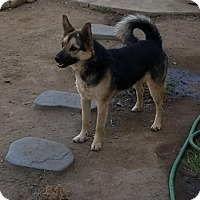 Adopt A Pet :: Chloe - Dana Point, CA