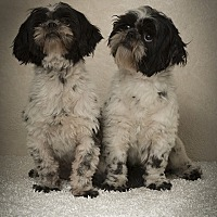 Adopt A Pet :: Dot & Pretty - Davie, FL