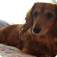 Adopt A Pet :: Miss Nala - Washington, DC