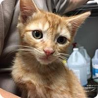 Adopt A Pet :: Freddy $20 - Lincolnton, NC