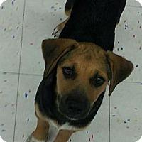 Adopt A Pet :: Hudson - Beaumont, TX
