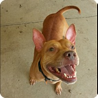 Adopt A Pet :: Pearce - Elderton, PA