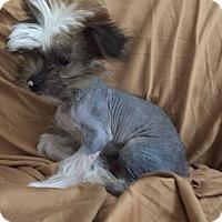 Adopt A Pet :: Mick - St. Petersburg, FL
