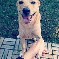 Adopt A Pet :: Leia - East Randolph, VT