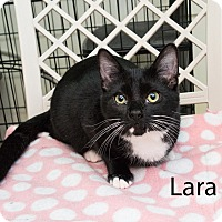 Adopt A Pet :: Lara - Shelton, WA