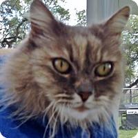 Adopt A Pet :: Shakira - Georgetown, TX