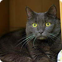 Adopt A Pet :: Pearl - East Hartford, CT