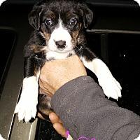 Adopt A Pet :: Margee - Sussex, NJ