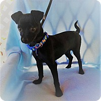 Adopt A Pet :: Garmen - Houston, TX