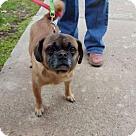Adopt A Pet :: Ms. Mia