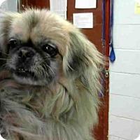 Adopt A Pet :: MS PRISS - Atlanta, GA