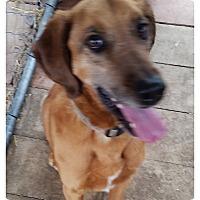 Adopt A Pet :: Tubby - Jackson, MO