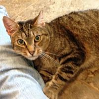 Adopt A Pet :: Fletcher - Alamogordo, NM