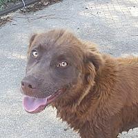 Adopt A Pet :: Hannah - Burlington, VT