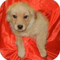 Adopt A Pet :: Giffard ADOPTED!! - Antioch, IL