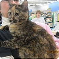Adopt A Pet :: Louise (pink nose) - Sterling Hgts, MI