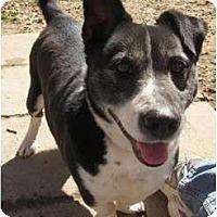 Adopt A Pet :: Vinnie - Afton, TN