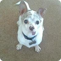 Adopt A Pet :: Rex - Upper Sandusky, OH